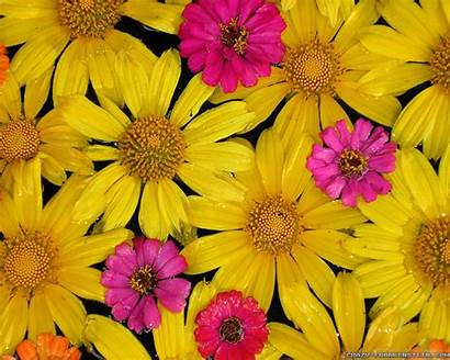 Frankenstein Crazy Wallpapers Colorful Flowers