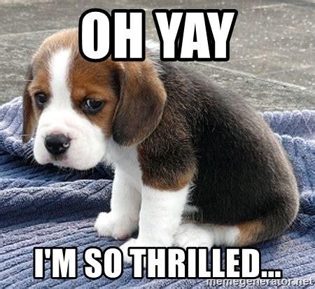 Yay Meme Face - oh yay i m so thrilled sad sad dog meme generator