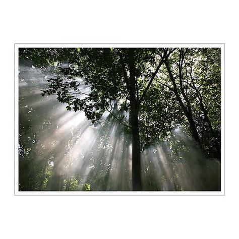 ikea canap駸 lits ikea premiar crescendo of light trees forest canopy canvas wall print mandala