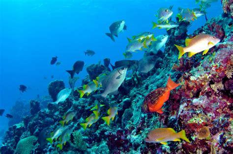 scuba discover scuba bermuda kings wharf dockyards