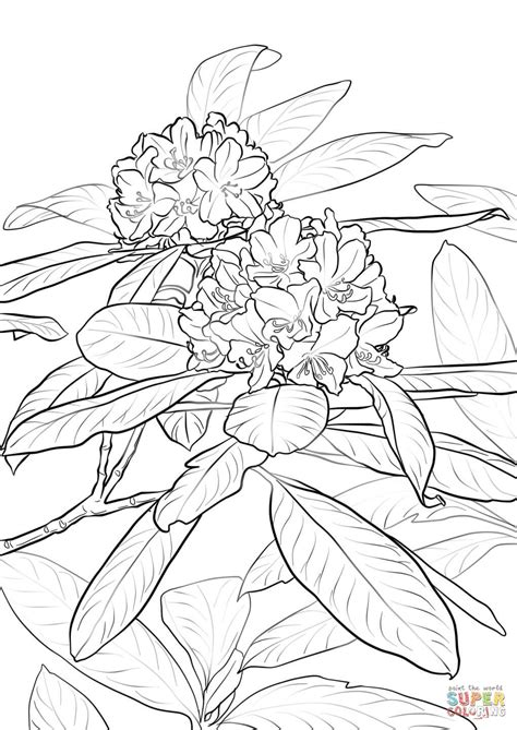 rhododendron flower drawing  getdrawings