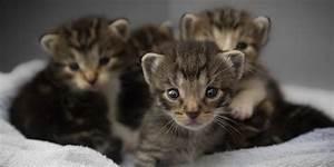 Allattamento gattini, vietato improvvisarsi Robinson Pet Blog