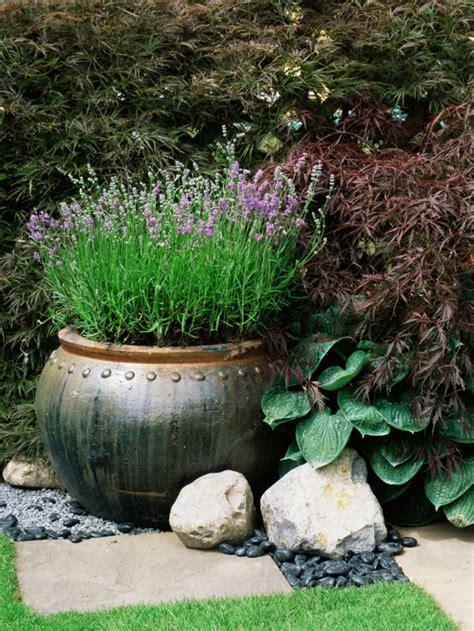 planter de la lavande id 233 es conseils et astuces