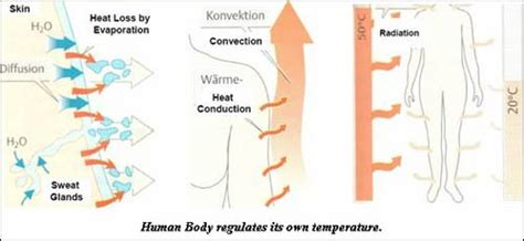 human goals to live 8 maintain temperature within normal range by adjusting clothing and