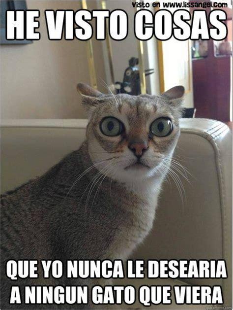 Memes De Gatos - recopilaci 243 n de memes animales volumen i memes de animales pinterest animales blog and meme
