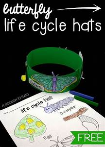 17 Best images about LIFE CYCLES - Science on Pinterest ...