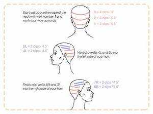 Hair Extension Placement Diagram