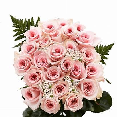 Roses Dozen Pink Flowers Bouquet Delivery Valentine
