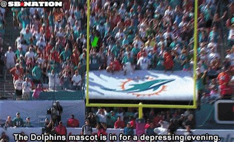 dolphins mascot doesnt    react   missed