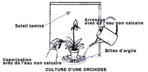 orchid 233 es phalaenopsis rempotage entretien florparadise
