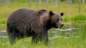 Bears 101