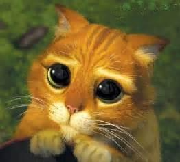 makeup school san jose adote um gato e cuide das 7 vidas dele e por favor