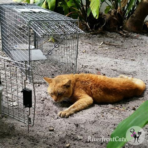 stray cat trap riverfront cats downtown miami