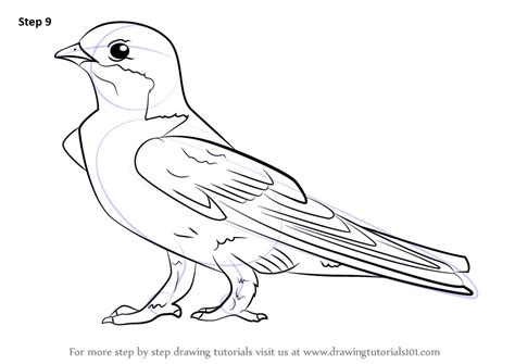 learn   draw  common house martin birds step