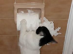 Cats vs. Toilet Paper: The Eternal Battle