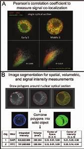 Signal Correlation  Spatial  And Volumetric Measurements