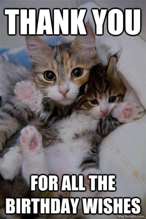 Thank You Cat Meme - thank you facebook graphics picgifs com