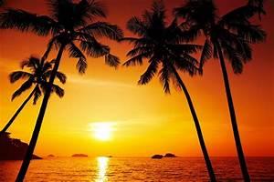 palm trees beautiful scenery sunset chang island thailand ...