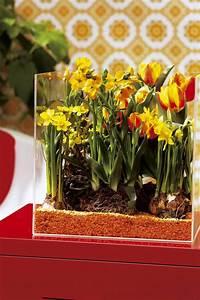 Tulpen Im Topf In Der Wohnung : fr hjahrsbl her im topf gegen stress und f r mehr lebensfreude pflanzen f r menschen ~ Buech-reservation.com Haus und Dekorationen