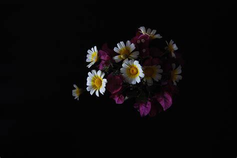 gambar wallpaper bunga ungu gudang wallpaper