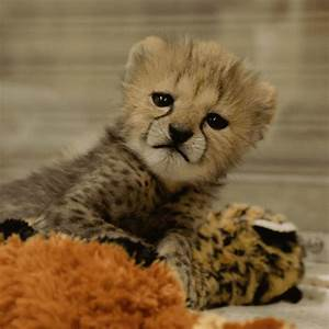 Happy Baby Animals GIF by San Diego Zoo - Find & Share on ...
