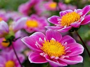 beautiful flowers wallpapers 2560x1600
