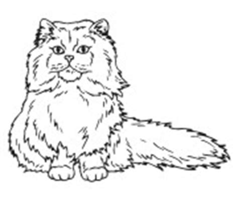 cat drawing for engraving