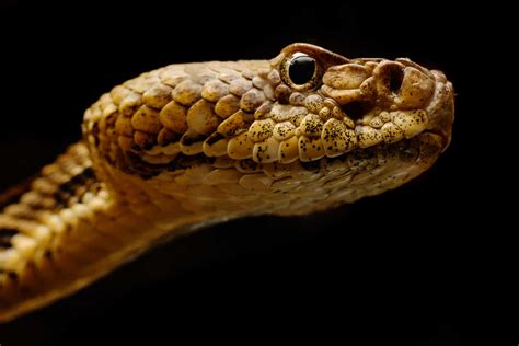 Study finds fungal disease of snakes in 19 states, Puerto ...