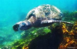 Galapagos Encounters: You Will See These 4 Animals - G ...