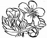 Cherry Coloring Pages Blossom Blossoms Flowers Clipart Clip Clipartbest sketch template