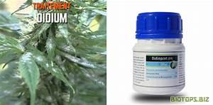 Traitement Contre L Oïdium : que faire contre les nuisibles du cannabis biotops biz ~ Dallasstarsshop.com Idées de Décoration