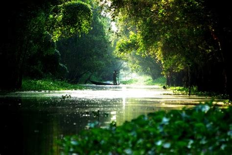 environmental degradation  singapore conservation