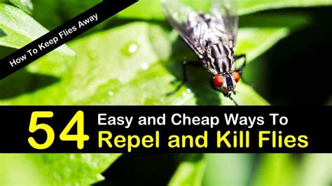 How To Keep Flies Away From Backyard by How To Keep Flies Away 54 Easy And Cheap Ways To Repel