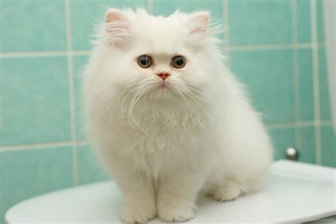 Small White Cat In The Bathroom Wallpapers And Images
