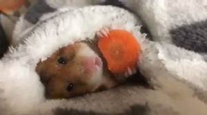 Cute Animal GIFs - Find & Share on GIPHY