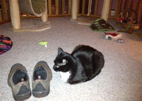 weird smells  cats  crazy  catster