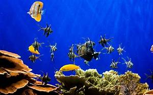 Fish tanks lower blood pressure and heart rate - Telegraph