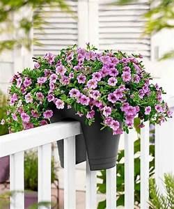Rosen Für Balkon : balkon bepflanzen und sich ber einen pr chtigen garten freuen ~ Michelbontemps.com Haus und Dekorationen