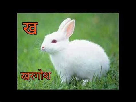 Learn 36 Hindi Varnamala Letters With Pictures Youtube