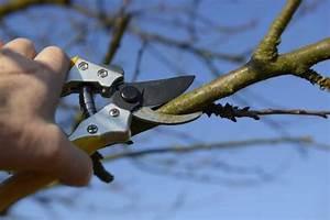 Tailler Un Citronnier : comment tailler les kiwis gamm vert ~ Melissatoandfro.com Idées de Décoration