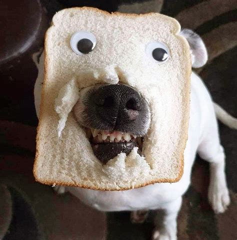 dogs wearing bread masks dont put  smile