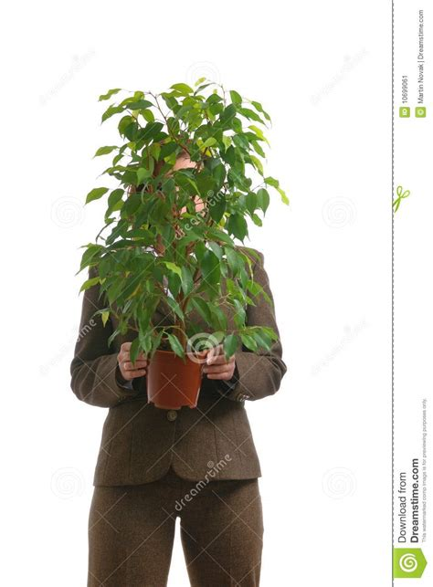 business woman hiding  plant isolated stock image
