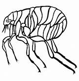 Flea Coloring Clipart Pages Insect Printable Animal Animals sketch template