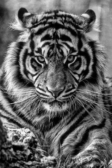 Greg Aurand - Awakened Living   Beautifully gorgeous.   Cute animals, Animals, Animals beautiful