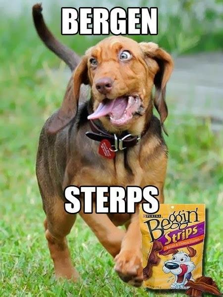 Funny Dog Face Meme - funny all animals memes photographs funny and cute animals