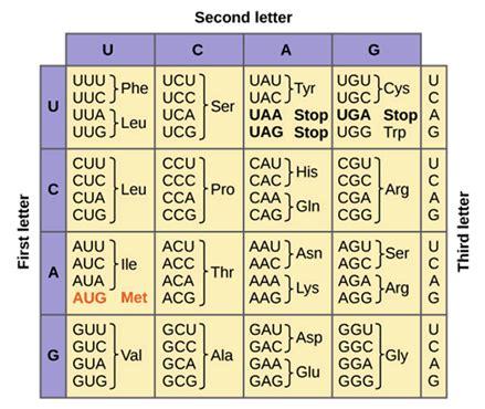 Code Table by Genetic Code Genetic Tables Properties Of Genetic Code