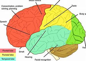 Brain Regions For Localization Of Function