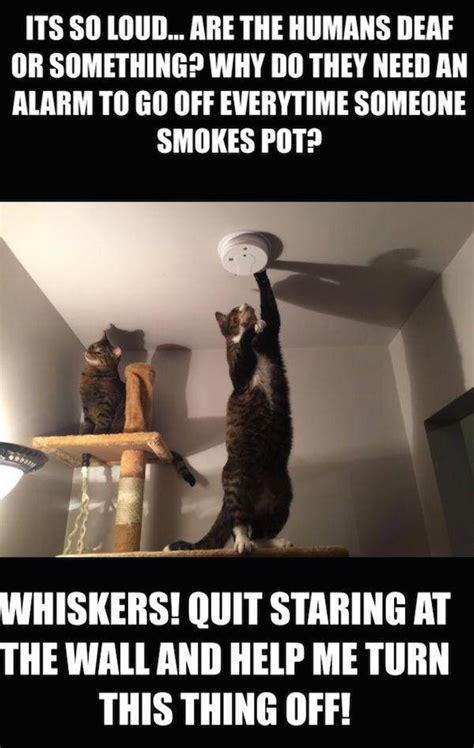 amusing memes    laugh  loud  pics