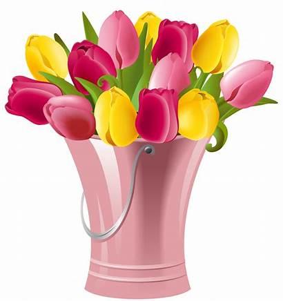 Spring Transparent Bucket Tulips Clip Clipart Tulip