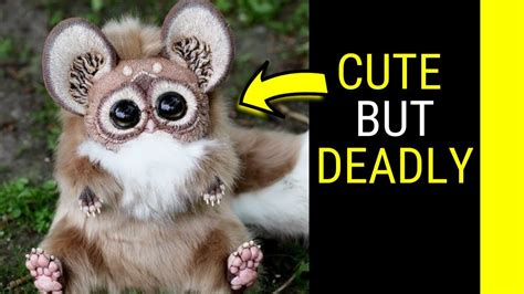 Top 10 most Cute but deadly animals in the world YouTube